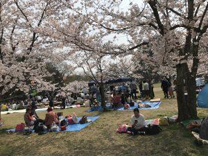 満開の桜でお花見